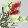 Bottle Brush flowers